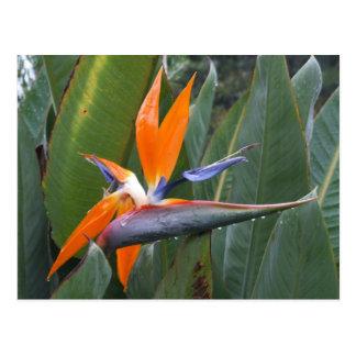 Oiseau de carte postale de fleur de paradis