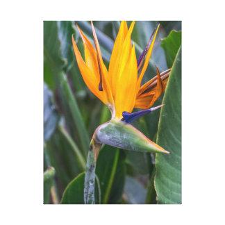 Oiseau de copie de toile de fleur de paradis