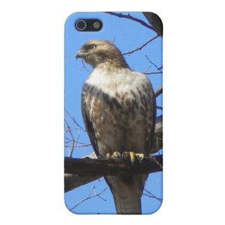 Oiseau de coque iphone de point de proie coque iPhone 5