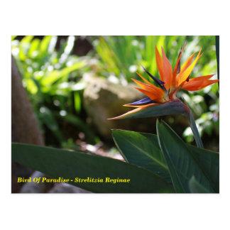 Oiseau du paradis - carte postale de Reginae de