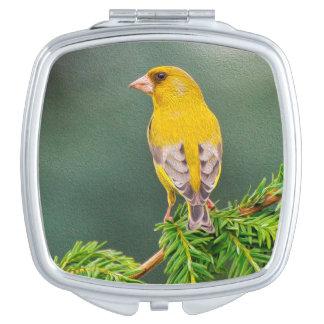 Oiseau jaune sur le carré de branche