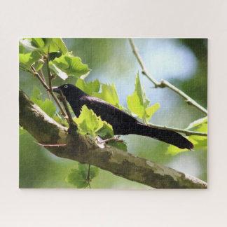 Oiseau, puzzle de photo