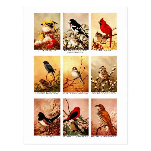 Oiseaux Cartes Postales