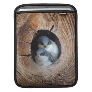 Oiseaux de bébé poches pour iPad