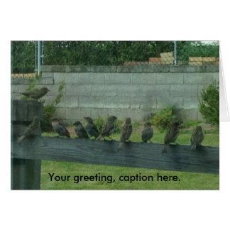 Oiseaux de moineaux sur un rail vos cartes de mots