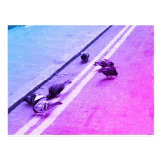 Oiseaux sur la route - carte postale
