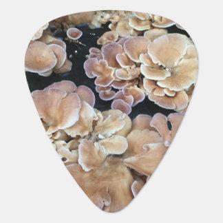 Onglet de guitare de champignons de fleur