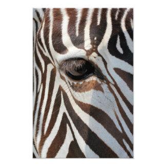 Oog van het Zebra Foto Afdruk