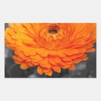 Oranje Bloem Rechthoekige Sticker