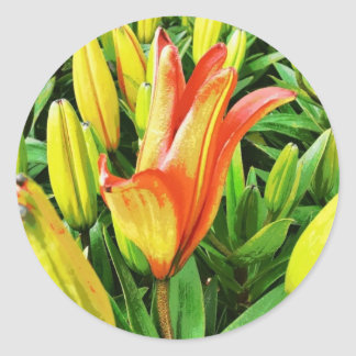 Oranje Bloem Ronde Stickers