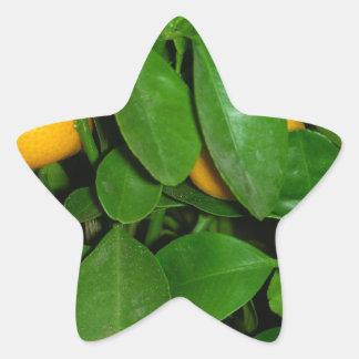 Oranje boom stervormige stickers