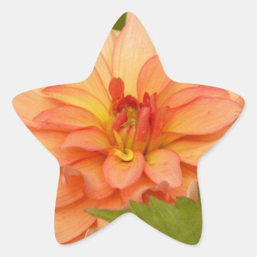 Oranje Dahlia's Stickers