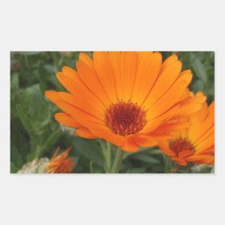 Oranje Dasies Rechthoekvormige Stickers
