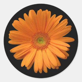 Oranje Gerber Daisy Ronde Stickers