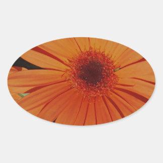 Oranje Gerbers Ovaalvormige Sticker