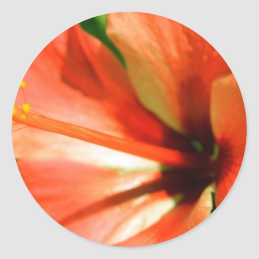 Oranje Gumamela Ronde Sticker