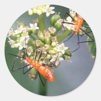 Oranje Insecten Ronde Stickers