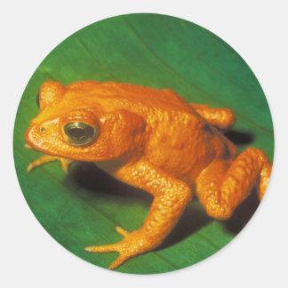 Oranje Kikker Stickers
