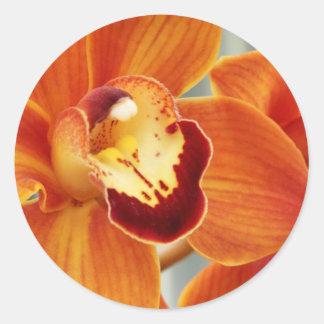 Oranje Orchidee Ronde Stickers
