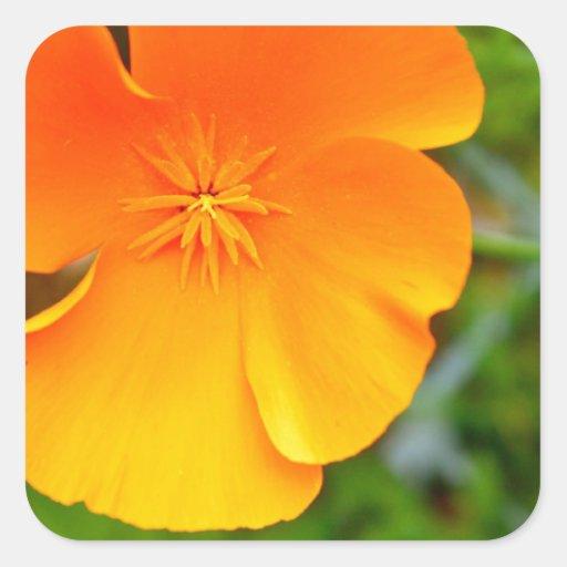 Oranje Papaver Vierkant Stickers