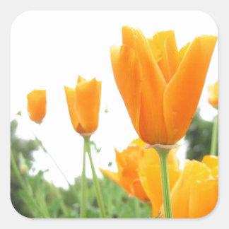 Oranje Tulpen Vierkante Stickers