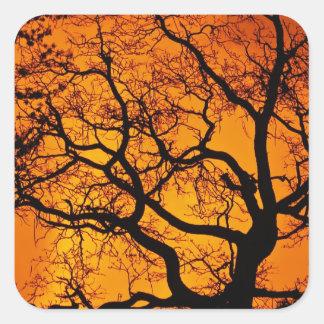 Oranje zonsondergang vierkante sticker