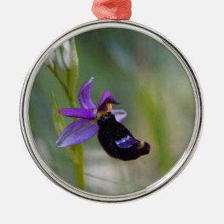 Orchidée d'abeille de Bertolonis (bertolonii Ornement Rond Argenté