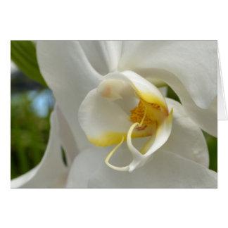 Orchidées blanches carte