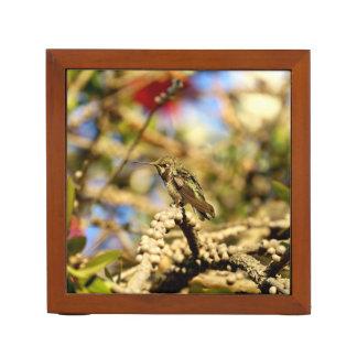 Organiseur De Bureau Le colibri d'Anna féminine, la Californie, photo