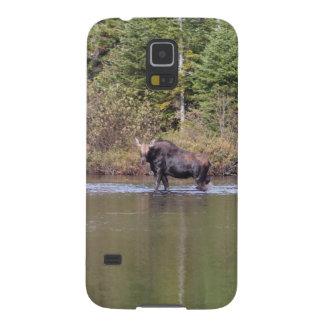Orignaux de vache du Maine Protection Galaxy S5
