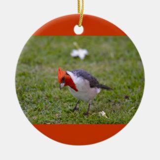 Ornement cardinal à crête rouge d'oiseau animal