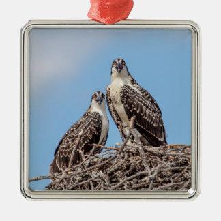 Ornement Carré Argenté Balbuzard juvénile dans le nid