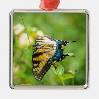Ornement Carré Argenté Beau papillon jaune