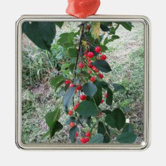 Ornement Carré Argenté Cerises rouges de Montmorency sur l'arbre dans le