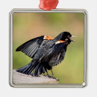 Ornement Carré Argenté Chant de merle à ailes rouges