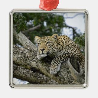 Ornement Carré Argenté Chat sauvage animal de safari de l'Afrique d'arbre