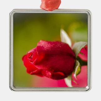 Ornement Carré Argenté Conception haute de fin de rose rouge