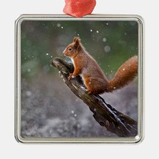 Ornement Carré Argenté Écureuil rouge en Ecosse