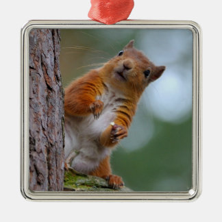 Ornement Carré Argenté Écureuil rouge sauvage dans la photo écossaise de