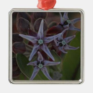 Ornement Carré Argenté Fleur de Milkweed