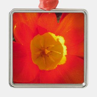 Ornement Carré Argenté Fleur ouverte de tulipe de rouge et de jaune