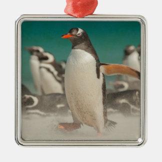 Ornement Carré Argenté Groupe de pingouin sur la plage, Malouines