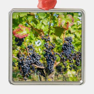 Ornement Carré Argenté Groupes bleus accrochants de raisin dans le