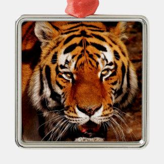 Ornement Carré Argenté Haut étroit de tigre