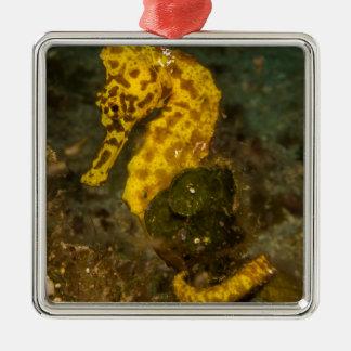 Ornement Carré Argenté Hippocampe jaune