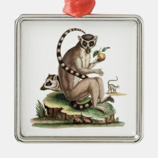Ornement Carré Argenté Illustration de lémur