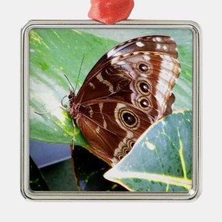 Ornement Carré Argenté insecte bronzage d'image de joli d'oeil de