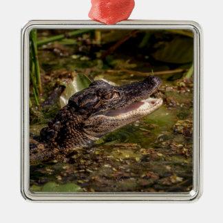 Ornement Carré Argenté Jeune alligator