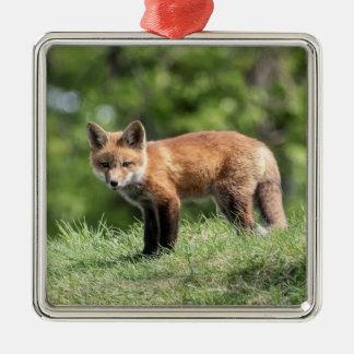 Ornement Carré Argenté Kit de Fox rouge