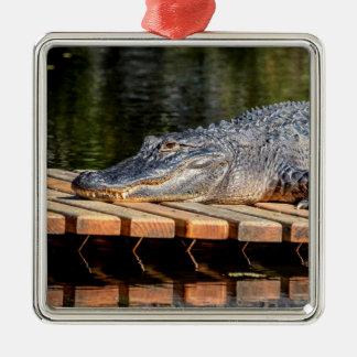 Ornement Carré Argenté L'alligator chez Homosassa jaillit parc d'état de